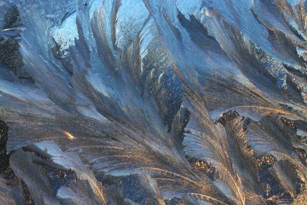 frostfeatherfish #2
